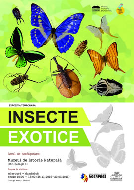 Exhibition: Exotic Insects